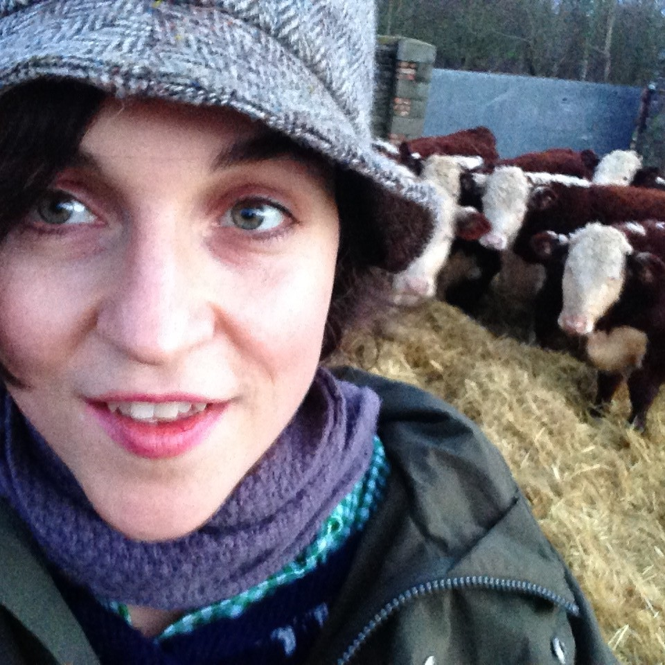 A 'felfie' snapped with some Hereford cattle