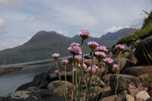 Thrift at the foot of the Balgy