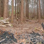 The woodlands after rhododendron clearance