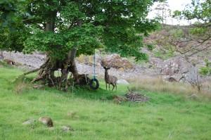 Antlers covered in velvet