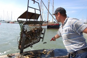 Bram Haward reaches for the dredging net fishing for oysters in Brightlingsea Harbour.