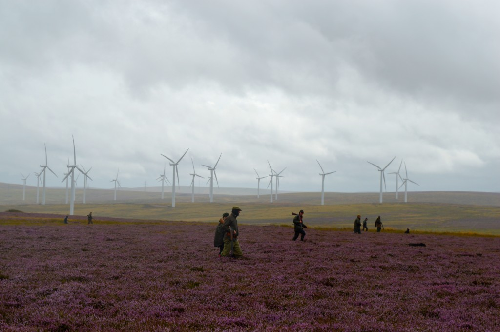A walked-up grouse shoot beneath the wind turbines