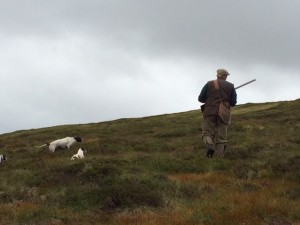 A jack russel shows a pointer how it's done